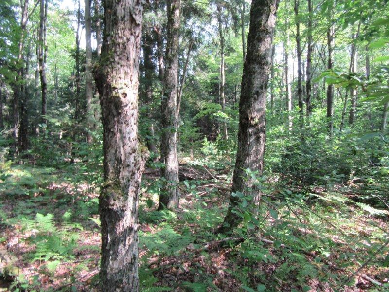7 acres Tug Hill Building Lot Williamstown NY