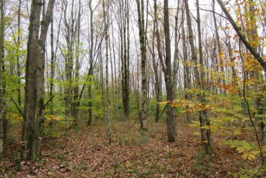 Hunting Land for sale in Tug Hill Region