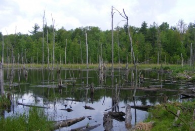 725 acres with Timber Value in Adirondacks