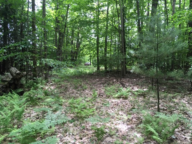 63 acres Hunting Land for sale with Camp Site in Parish, NY!