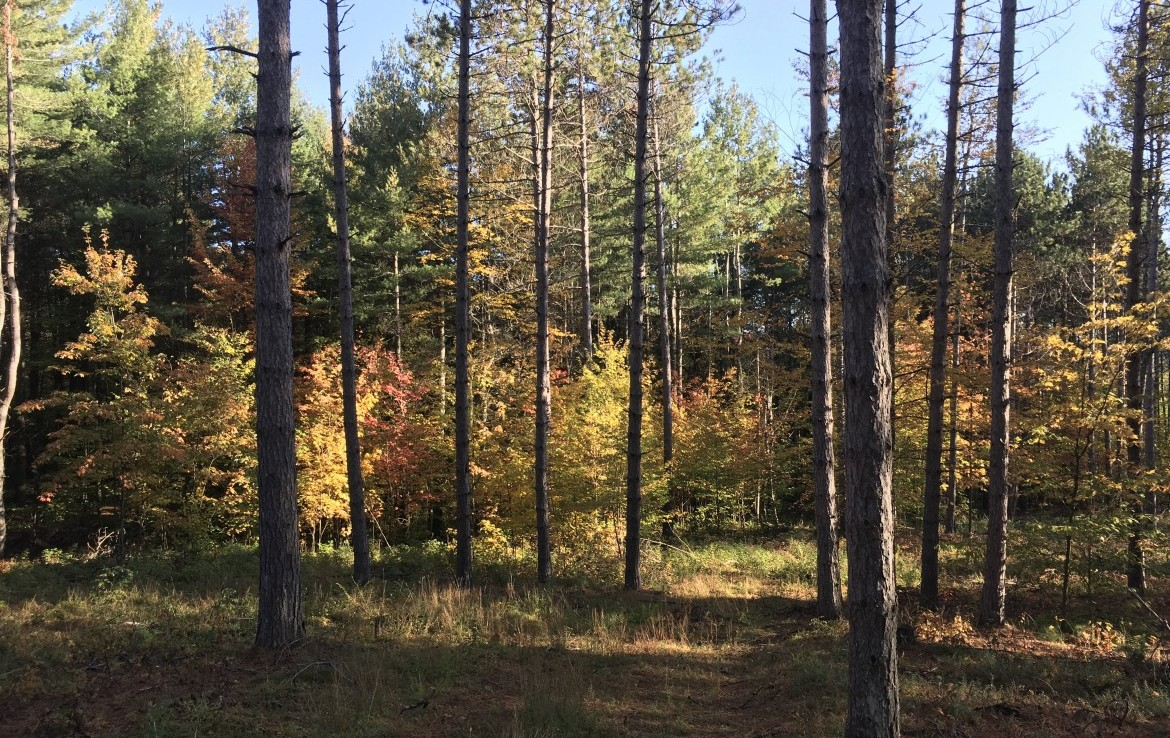 This 5 acre property provides a choice location for an Adirondack base camp.