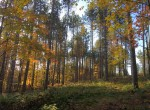5 acres Hunting Land for sale in the Adirondacks!