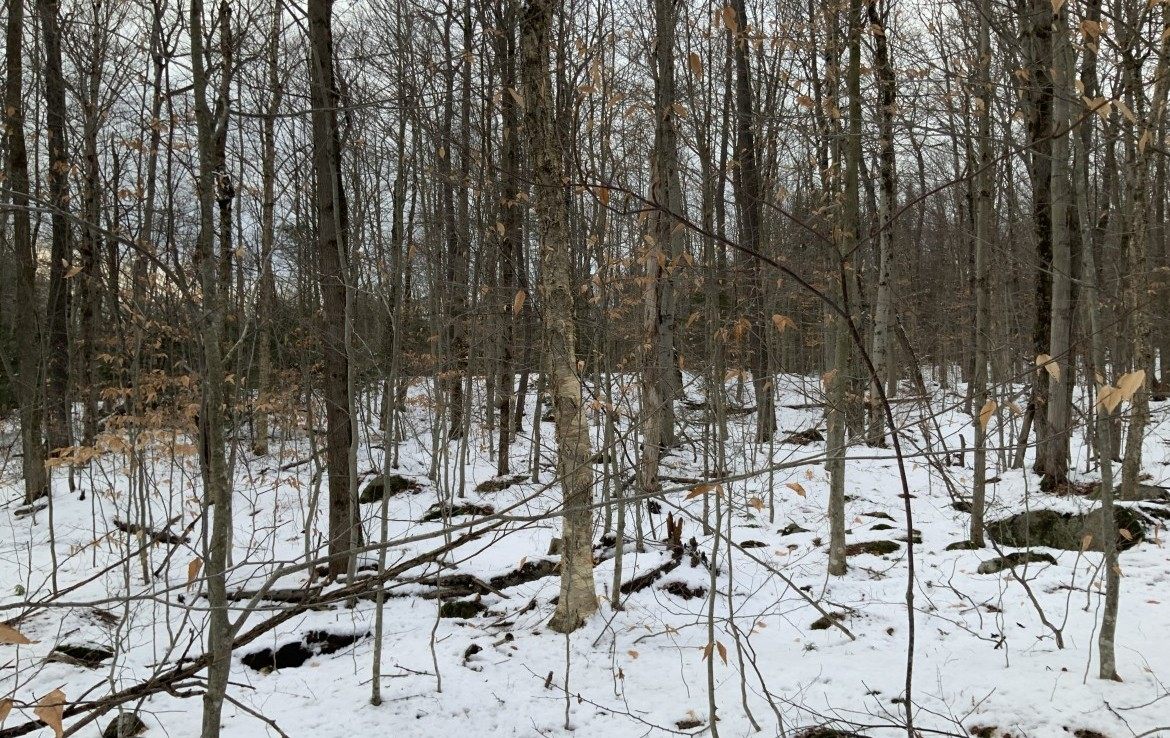 ideal location for a long term timber investment