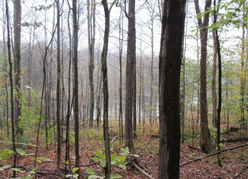 10 acres Wooded Land for Sale with Pond in Pharsalia, NY!