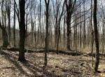 5.9 acres Hunting Land for Sale Bordering Beaver Meadow State Forest, Smyrna, NY!