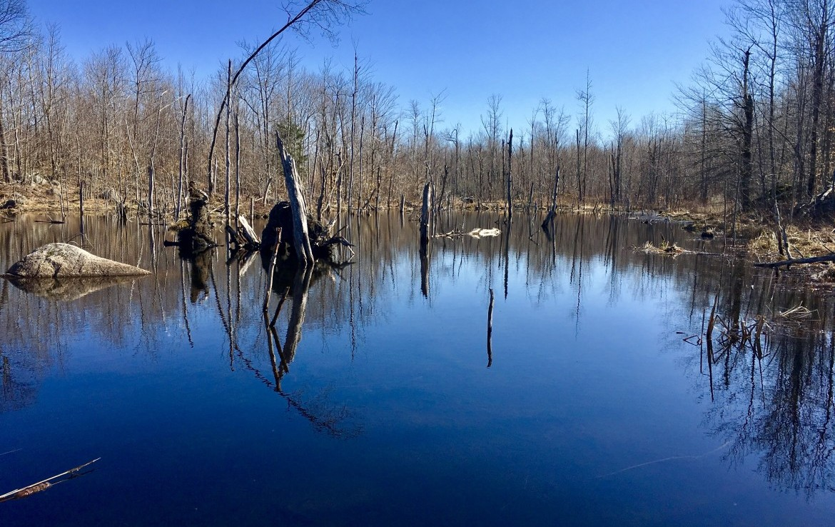 Forests and Woodland Ponds Abound On This Secluded Sportsman's Hunting Paradise!