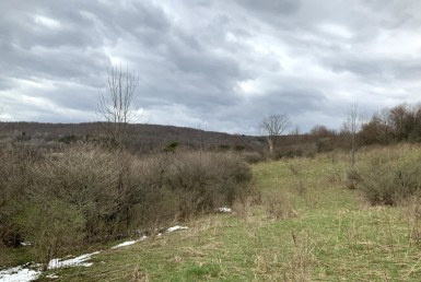 17 acres Hunting Land Bridgewater NY