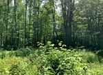36 acres Wooded Land For Sale in Camden, NY!